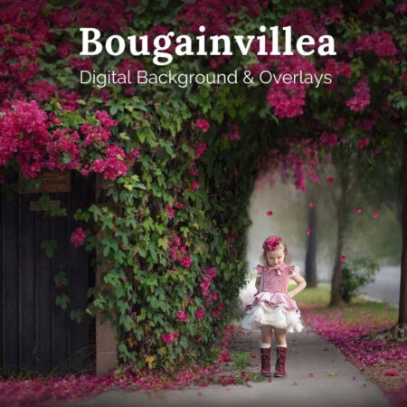JD Bougainvillea Digital Background and Overlays
