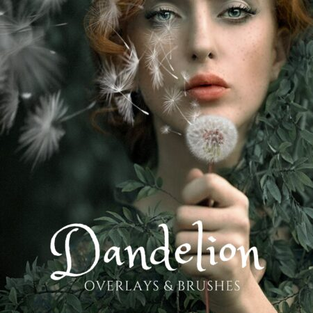 JD Dandelion and Brushes Cover
